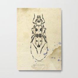 Longicorn rosalia Metal Print