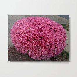 Like a little pink tuffet Metal Print