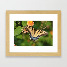Swallowtail Framed Art Print
