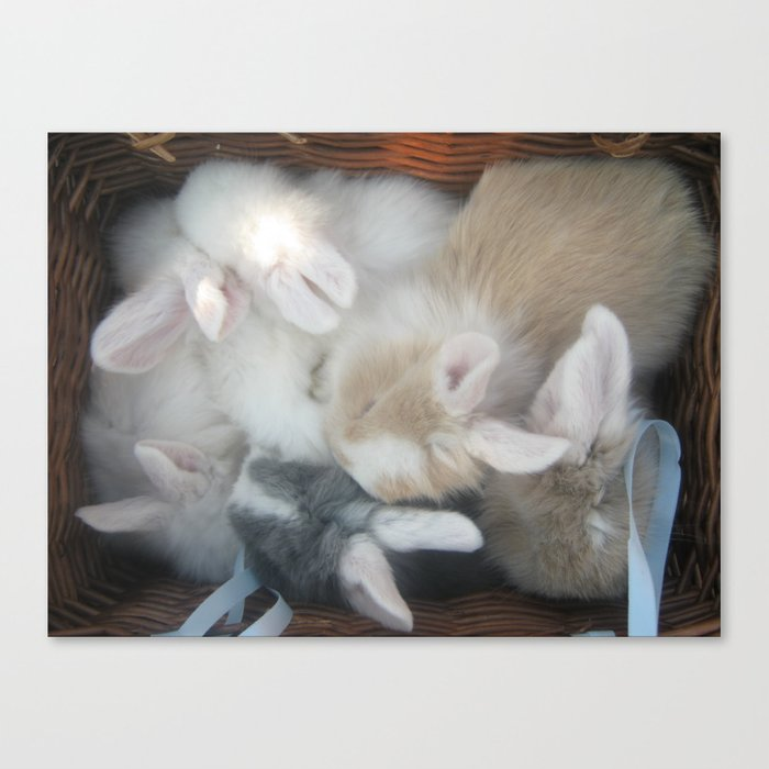 bunnies in a basket  Canvas Print