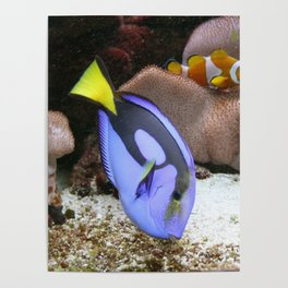 Coral Reef and Fish Poster
