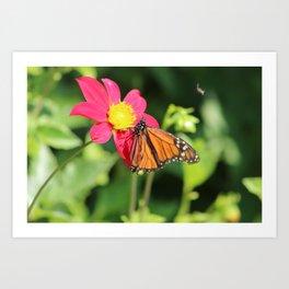 Butterfly on flower in bloom Art Print