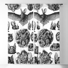 Ernst Haeckel Bats Blackout Curtain