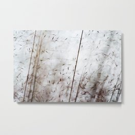 White pampas grass I Metal Print