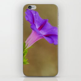 Purple Morning Glory iPhone Skin