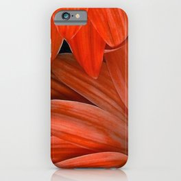 Orange Gerberas iPhone Case