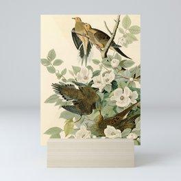 Carolina Turtle Dove (Zenaida macroura) Mini Art Print