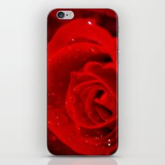 A rose is a rose is a rose iPhone & iPod Skin