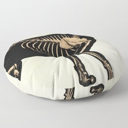 Vintage French zoological board - Cat skeleton Floor Pillow