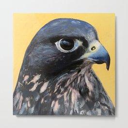 Peregrine Falcon Metal Print