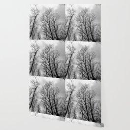 Creepy black and white trees Wallpaper