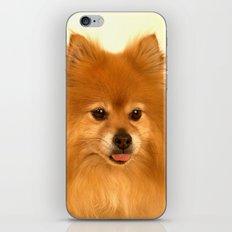 Cute Pomeranian dog iPhone & iPod Skin