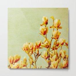 wednesday's magnolias Metal Print