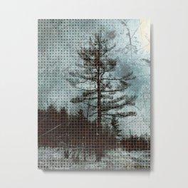 Old Pine Tree Metal Print