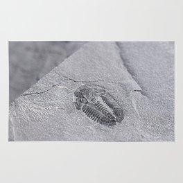 Utah - Trilobite Fossil Slab Rug