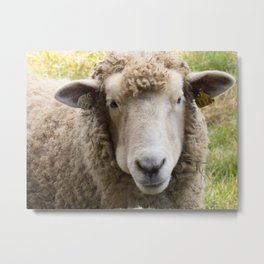 Sweet Sheep Face Metal Print