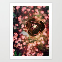 Marsala Tulip Flower Art Print
