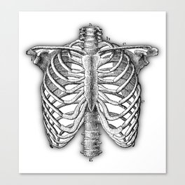 Vintage Skeleton Canvas Print