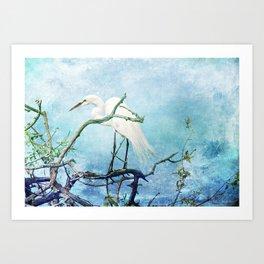 Rookery White Egret Art Print