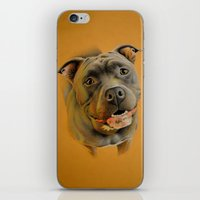 pit bull iPhone & iPod Skins featuring American pit bull terrier by Frederica Morgan