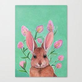 Trifolium arvense Canvas Print