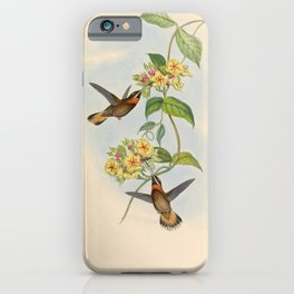 Pale-tailed Barbthroat Hummingbird by John Gould, 1861 (benefitting the Nature Conservancy) iPhone Case