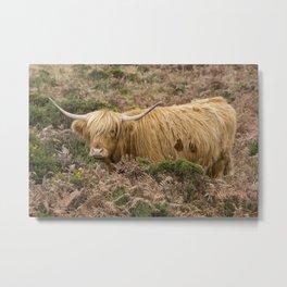 Highland Lad Metal Print