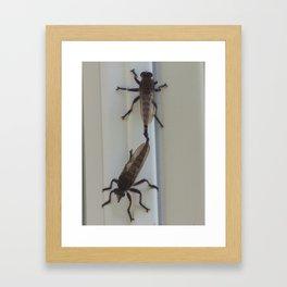 Robber Flies in Love II Framed Art Print