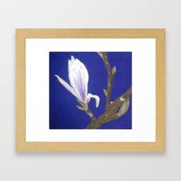 Magnolia Bud Framed Art Print