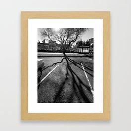 Shadow Tree - Pacific Northwest Framed Art Print