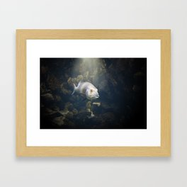 A Fish Framed Art Print