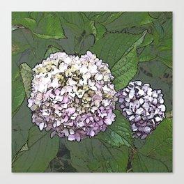 Two hydrangeas Canvas Print