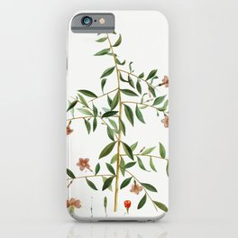 Sunflower petals on a table iPhone Case