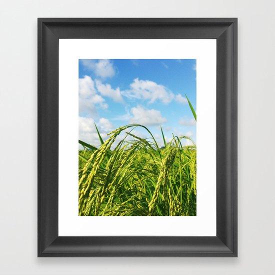 Ripe Rice Framed Art Print