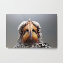 Southern Yellow-Billed Hornbill (Zazu) Metal Print