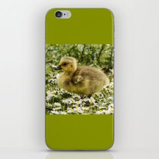 Fluffy Gosling iPhone & iPod Skin