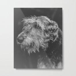 The Irish Wolfhound Metal Print