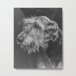 The Irish Wolfhound Metal Print