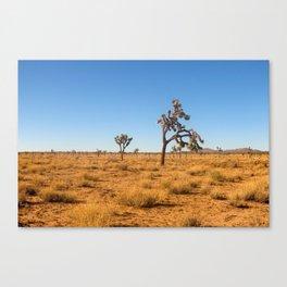 Joshua Tree 002 Canvas Print