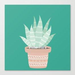 Cactus Suculents Plants Canvas Print