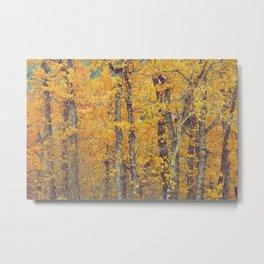 Cottonwood Orange Metal Print