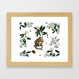 Monkey World: Amber-Ella - White Framed Art Print