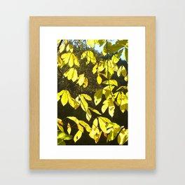 Yellow for Banana but not Banana Leaves Framed Art Print