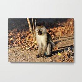 Cute Vervet Monkey in the Wilde Metal Print
