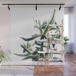 Jade - money plant - succulent in bright light Wall Mural