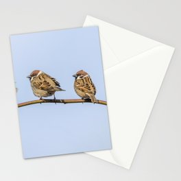 Tree Sparrows on branch (Passer montanus) Close Up Stationery Cards