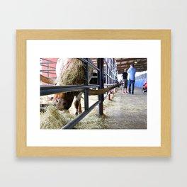 Texas Rodeo Framed Art Print