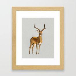 Money antelope Framed Art Print