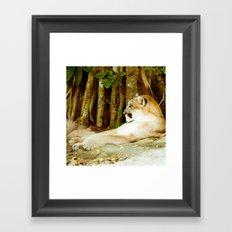 Feline Cat Framed Art Print