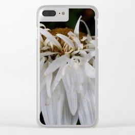 Shasta daisy three Clear iPhone Case